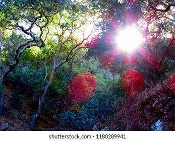 Mountainside with sun shining through trees