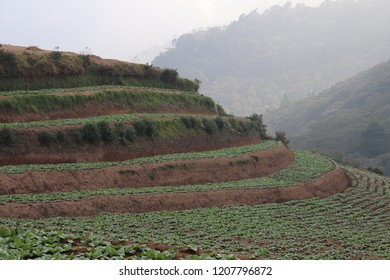 mountainside vegetable plantations. the background of the clouded tropical forest. unique and beautiful land contours