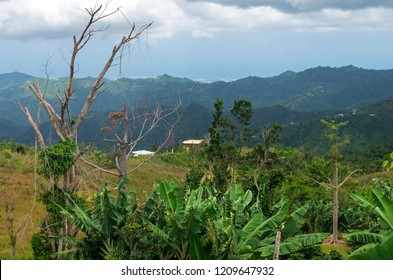 mountainside vista in cordillera central region of jayuya puerto rico