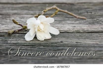 mourning card with white magnolia/sincere condolences/english