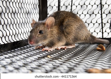 A mouse in the Cage in isolated White Background