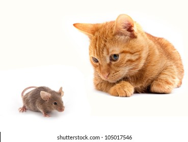 Mouse and cat isolated on white background
