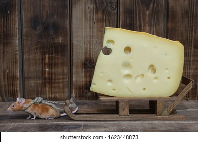 Mouse and cheese. Dreams come true! Cute mouse pulls tasty Swiss cheese with holes. Pet gourmet. Nutrition and delivery. Funny stubborn animal on diet. Hard work. Mouse wants delicious dinner. Glutton