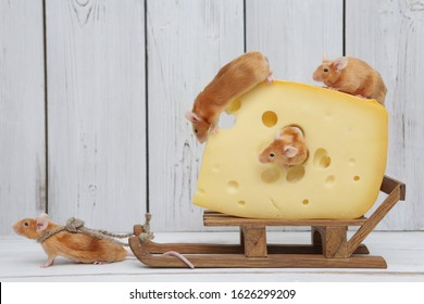Mouse and cheese. Dreams come true! Cute mouse pulls tasty cheese. Glutton. Pet gourmet. Animal eat. Hard work. Mice want delicious lunch. Parasites, idlers. Government, people. Nutrition and delivery