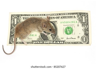 mouse and the dollar on a white background
