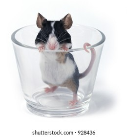mouse in a glass on a white background