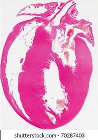 Mouse heart anatomy