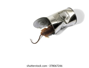 Mouse Inside a Dented Empty Food Can Made of Tin on a White Background