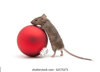 Mouse looking over a red Christmas bauble - isolated on white