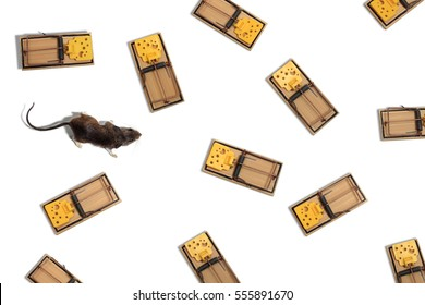 Mouse in Maze of Mousetraps