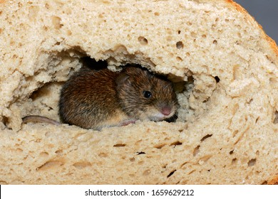 Mouse sitting in a bread