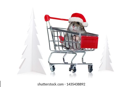 Mouse wearing Christmas hat sitting in the shopping trolley