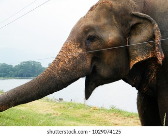 Mouth of the elephant.Elephant mouth near to electrical fence.Waiting for food at fence.