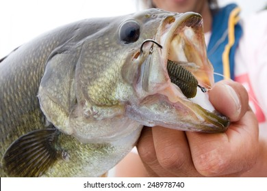 Mouth of the large-mouth bass
