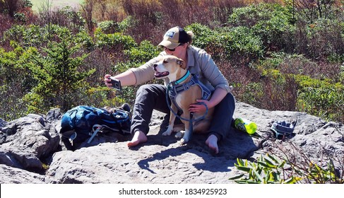 Mouth of Wilson, Virginia / USA - October 14, 2020: A young woman hiker photographing herself and her pit bull dog while taking a break on a rocky outcrop at Grayson Highlands State Park.