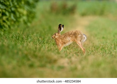 Movement nearby startles the hare.