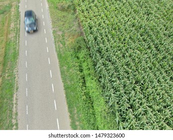 A moving car next to a corn field