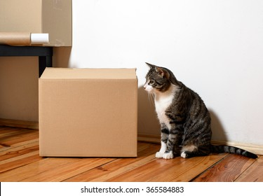 Moving day - cat and cardboard boxes on floor in room