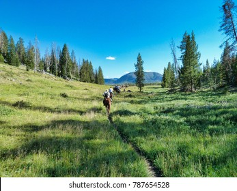 Moving down the trail - Yellowstone National Park