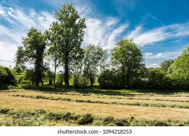 Mowed meadows and trees