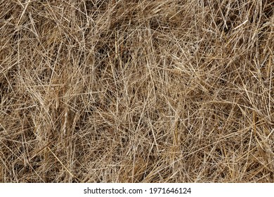 Mowed Straw - Natural Concept Background