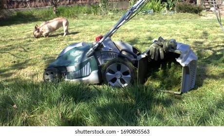 mower in the green garden
