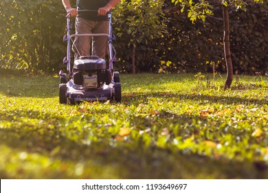 Mowing the grass with a lawn mower in garden at early autumn. Mulching the grass at backyard.