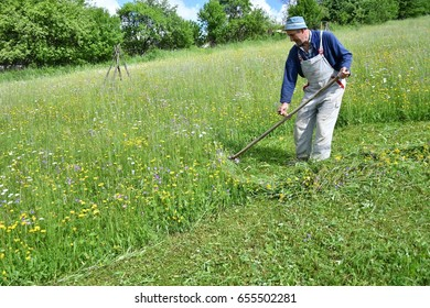 mowing the grass traditional way with the scythe