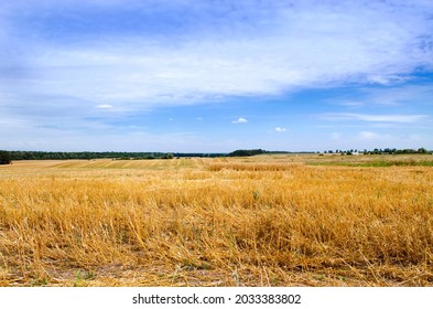 A mown field of cereals in summer. Landscape with golden stubble against the blue sky. Stubble, harvesting.