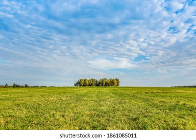 A mown field, a grove in the distance in the evening at sunset on a Sunny day in early autumn. Moscow Region, Russia