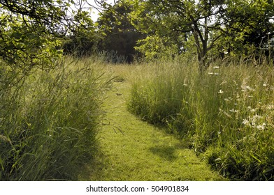 Mown pathway through tall grass and wildflowers in an english country garden in summer