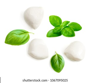 Mozzarella cheese and basil leaf  isolated on white background. Top view