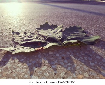 Mprmijg sun glaring at angle on side of camera when taking photograph of giant leaf at trainstation
