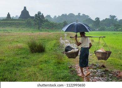 MRAUK U, MYANMAR - AUGUST 31, 2017: A Burmese farmer walking on the field in the rain and carrying things on a shoulder pole with a Buddhist pagoda in the background