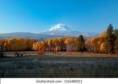 Mt Adams sunset with autumn aspens