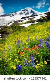 Mt. Baker, Washington. The wildflowers are in abundance during the month of August near the summit of Mt. Baker in the Pacific Northwest. Lupine, Indian Paintbrush, and Yellow Asters are seen here.