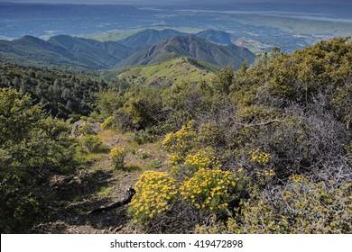 Mt. Diablo Springtime Quarry View