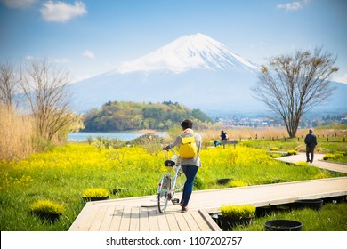 Mt diamond fuji with snow and flower garden along the wooden bridge at Kawaguchiko lake in japan, Mt Fuji is one of famous place in Japan. A women take a bicycle on wooden bridge.