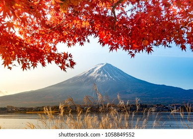 Mt Fuji in autumn behind the red maple tree from Lake Kawaguchi in Yamanashi Prefecture, Japan.
