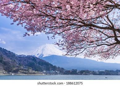 Mt Fuji and Cherry Blossom
