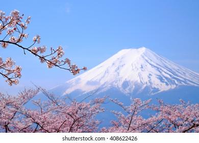 Mt Fuji and Cherry Blossom  in Japan Spring Season (Japanese Call Sakura ) Selective Focus