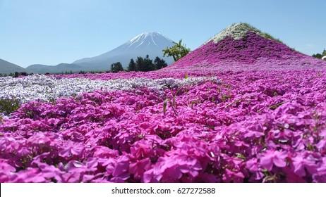 Mt Fuji Flower Festival