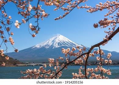 Mt. Fuji, Japan on Lake Kawaguchi during spring season with cherry blossoms.