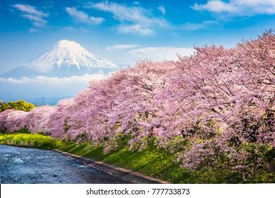 Mt. Fuji, Japan spring landscape. - Shutterstock ID 777733873
