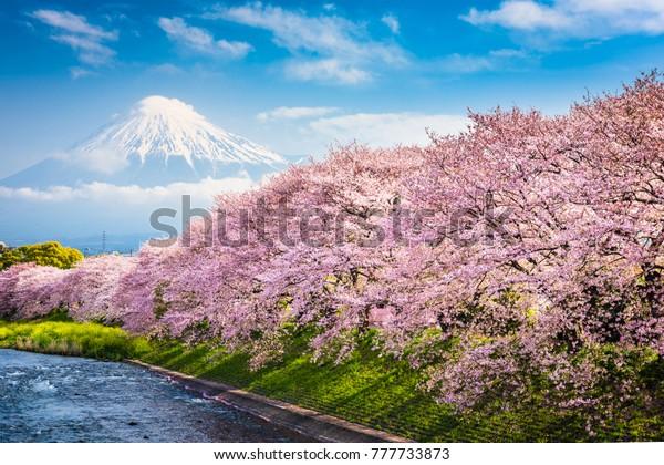 Mt. Fuji, Japan spring landscape.