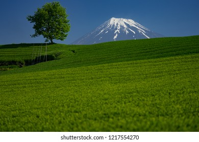 Mt. Fuji over the tea field