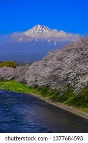 Mt Fuji of Spring