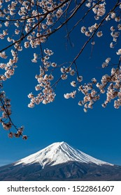 Mt. Fuji in the spring time with cherry blossoms at kawaguchiko Fujiyoshida, Japan. Mount Fuji is Japan tallest mountain and popular with both Japanese and foreign tourists.