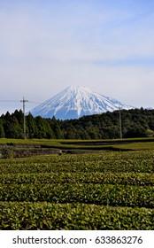 Mt. Fuji and a tea garden in Shizuoka, Japan