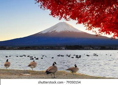 Mt Fuji view from lake Kawaguchiko in autumn color